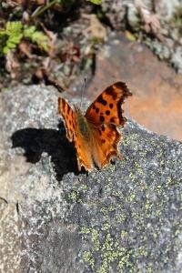 Hope like a butterfly